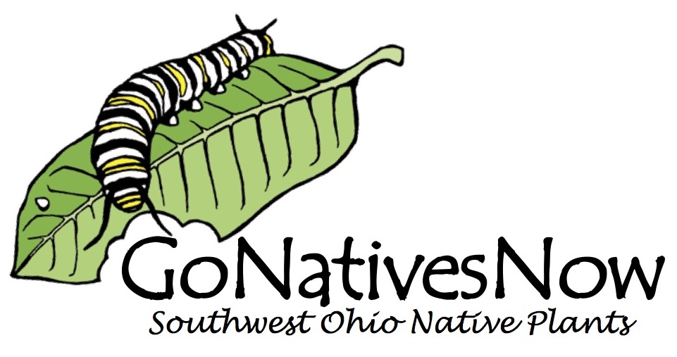 Native plants logo with monarch cat eating milkweed